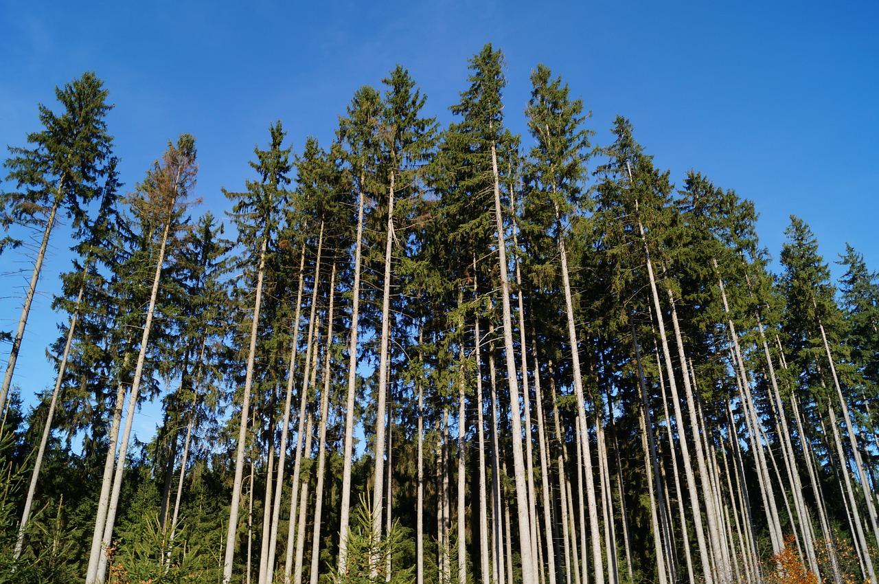 matériau bois et environnement